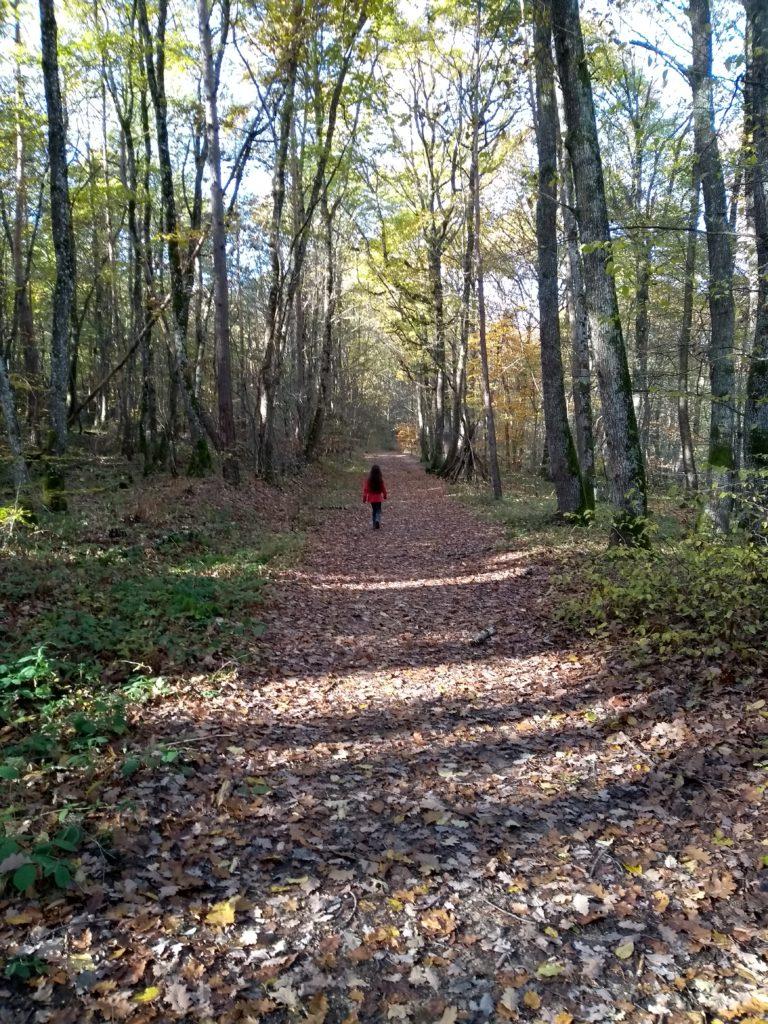 Randonnée en forêt des Colettes