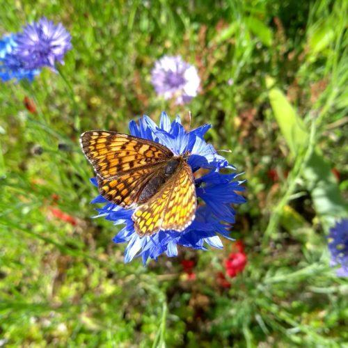 Biodiversité à Bellenaves